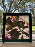 Dried Flower Suncatchers from Learn To G