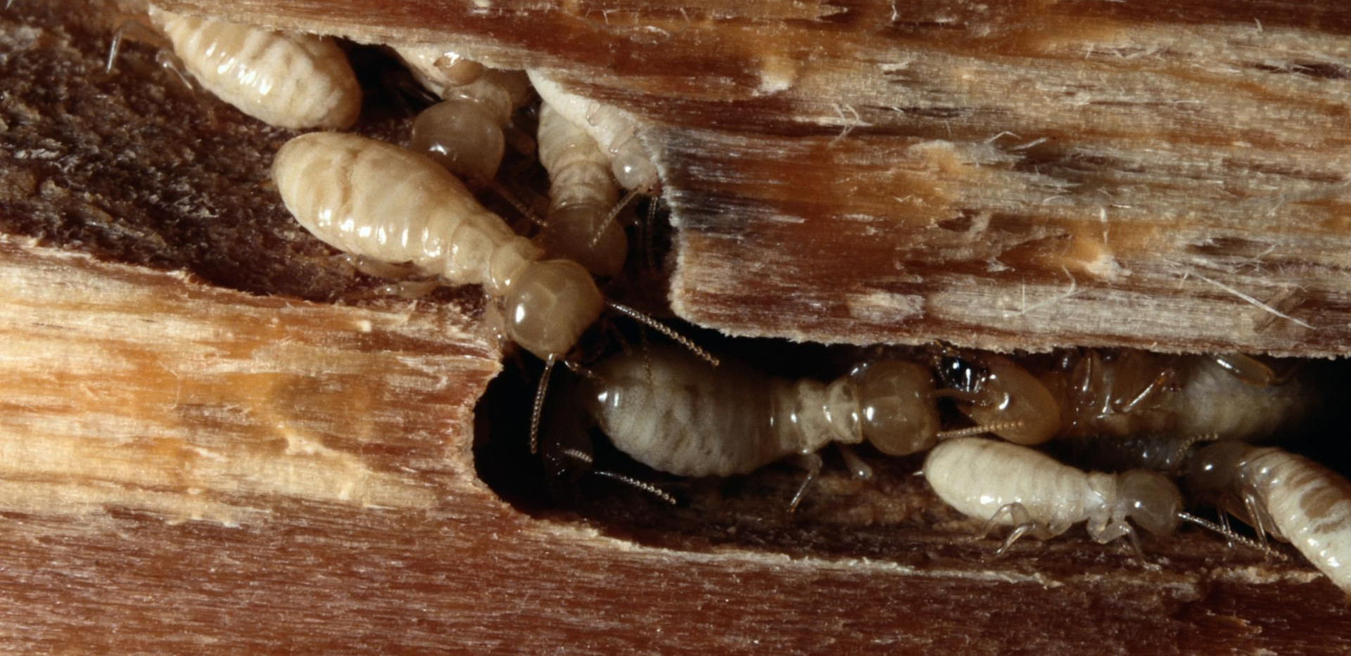 Wood Destorying Insects