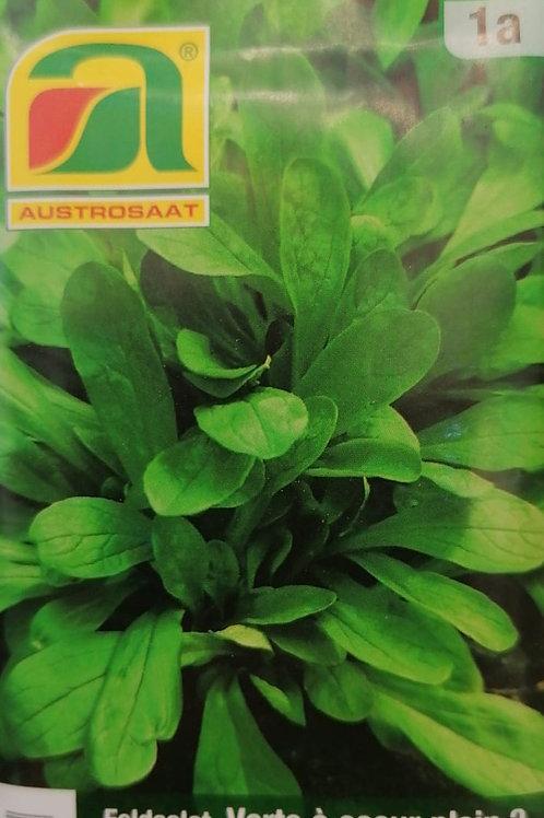Feldsalatsamen - Dunkelgrüner Vollherziger