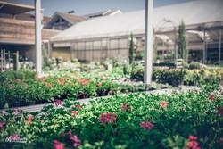 Balkonblumen kaufen in Voitsberg