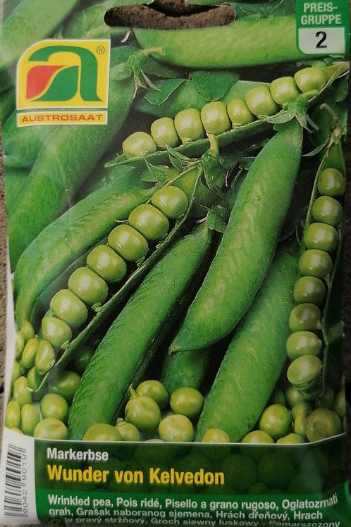 Markerbsen - Wunder von Kelvedon - Samen