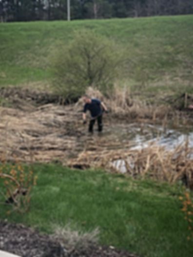 Jim cleaning up the wetlands by the office.