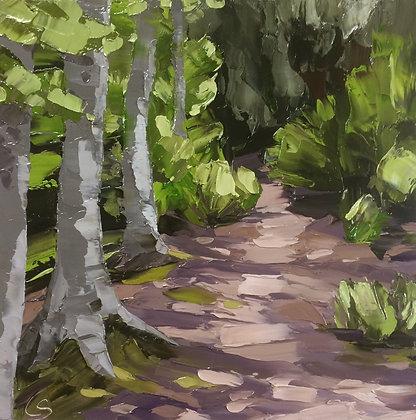 The Beech Trees