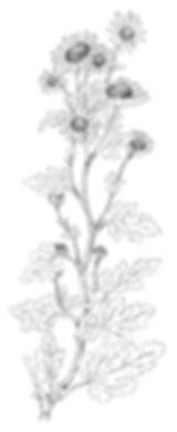 yhk._plants01のコピー_small.jpg