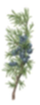 hrb_09_fin_small.jpg