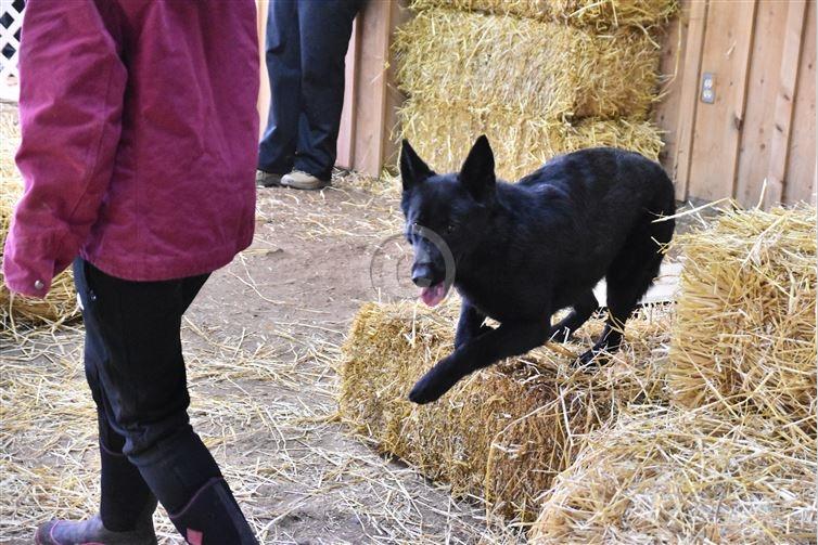 Barn Hunt