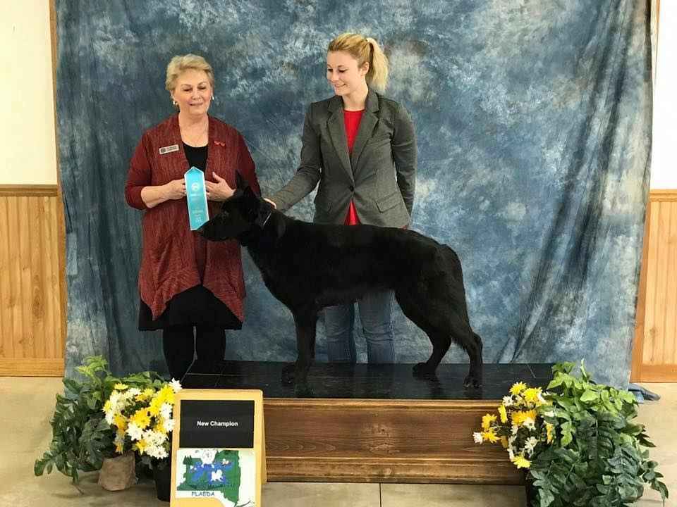Lyra's UKC CH at 22 months