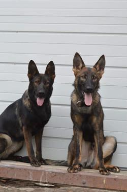 Mercy (left) & half brother Khaos