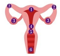 chirurgische-menopauze.png