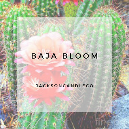 Baja Bloom