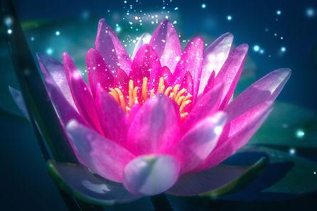 lotus-sparkle.jpg