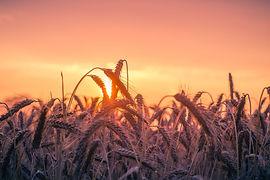 abendstimmung-agriculture-back-light-cer