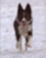 Dog Walking, Training and Pet Care in Mpls