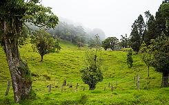 francisco-rocha-fazendinha2.jpg