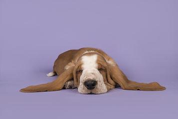 Dog Waking Bronze Package