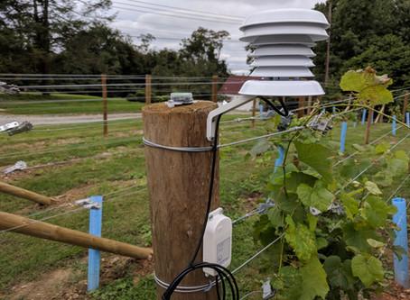 Starting a Backyard Vineyard - Part 2