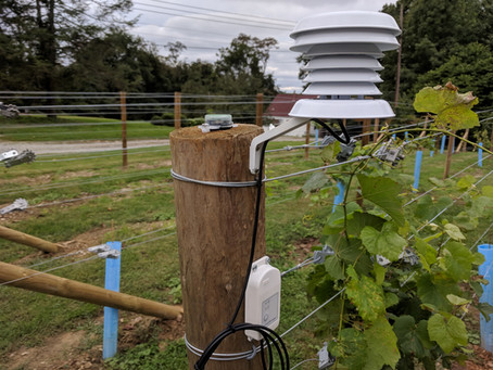 Starting a Backyard Vineyard - Part 2