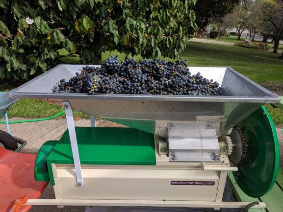 Red Grapes in a Crusher Destemmer