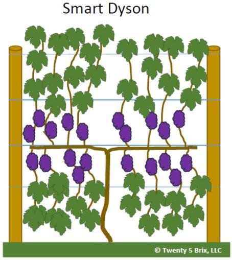Smart Dyson Vine Training System