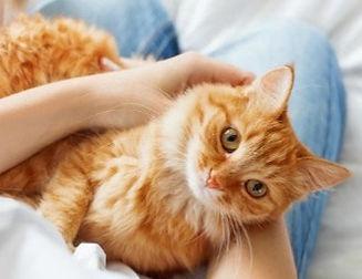 cat-cuddling-with-mom-resized_edited.jpg