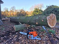 Oak tree dismantle 6