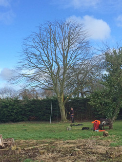 Lime tree reduction AFTER