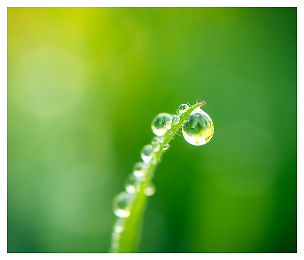 Morning Dew on grass , Copyright Dan 2018