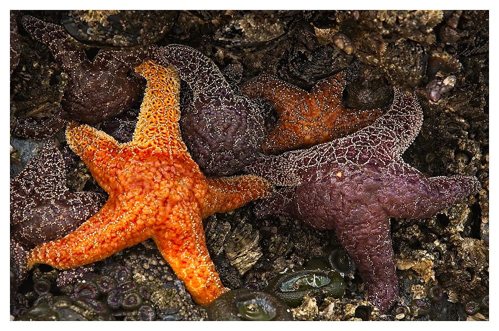 Starfish by Dan 2019