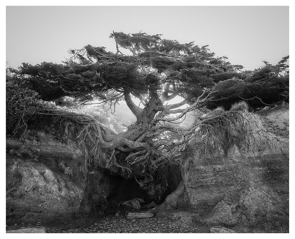 Tree of Life, copyright Dan 2019