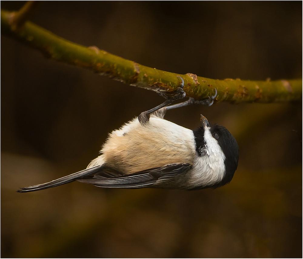 a bird eating by Dan 2020