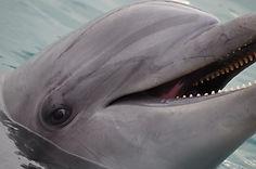 the-dolphin-3354707_960_720[1].jpg