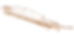 feather-305273_960_720[1].png