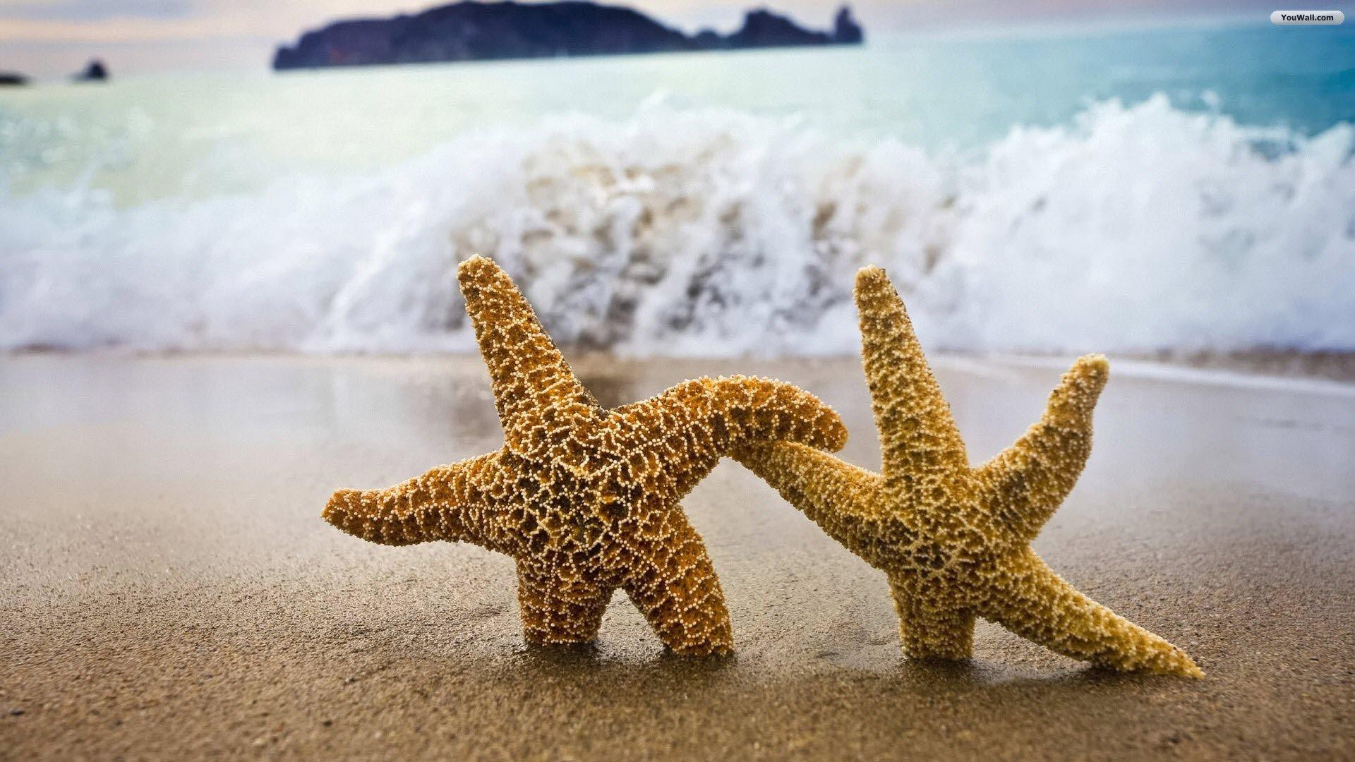 beach-stars-wallpaper