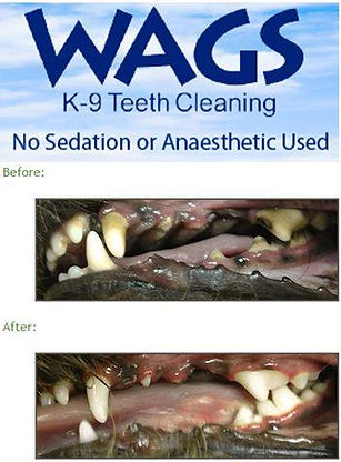 Non Anaesthetic Dog Teeth Cleaning
