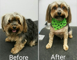 BeforeAfter_Winston