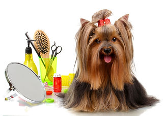 Dog-grooming-No.1.jpg
