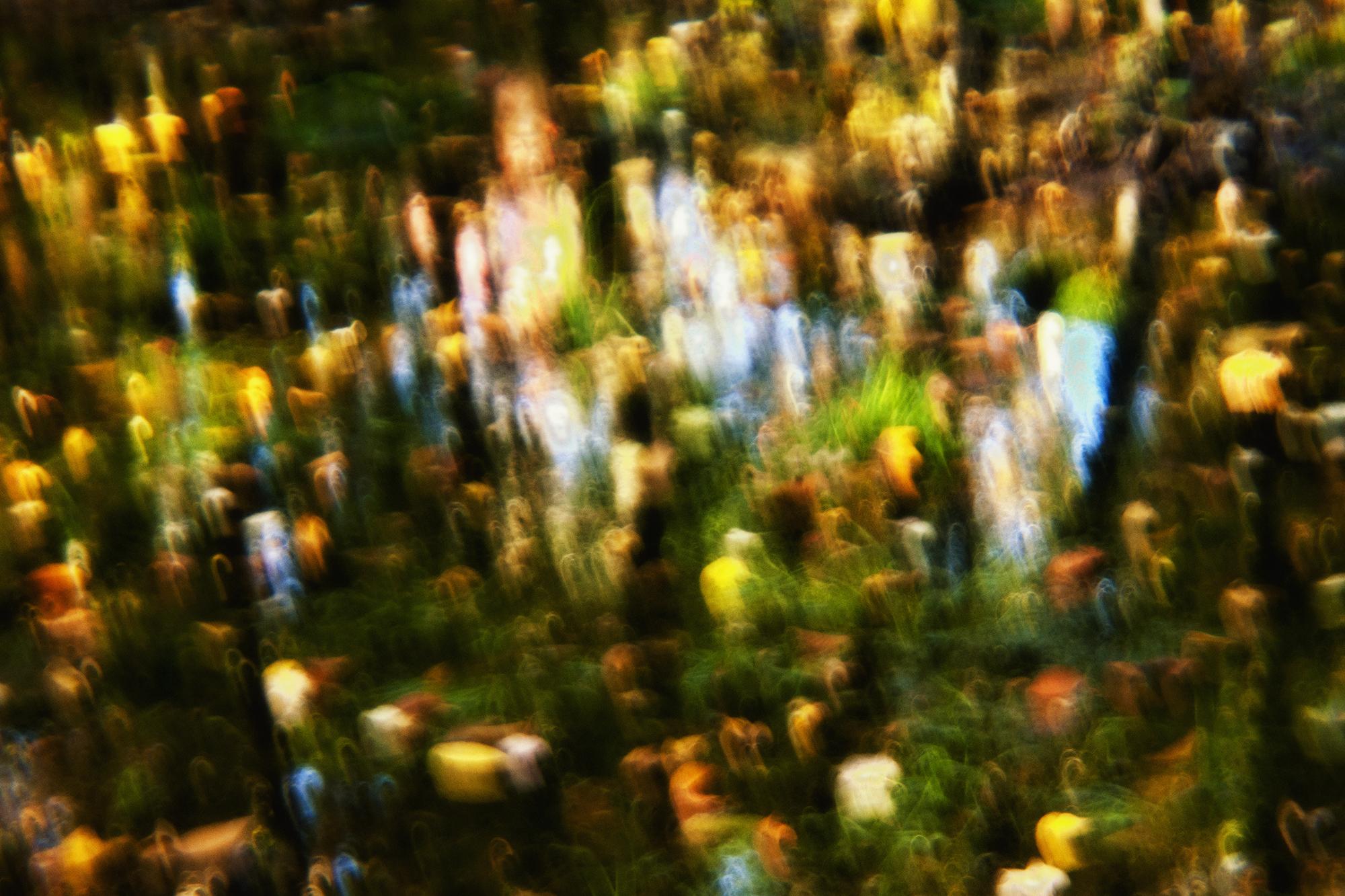 dfall-poesiebucolique-05