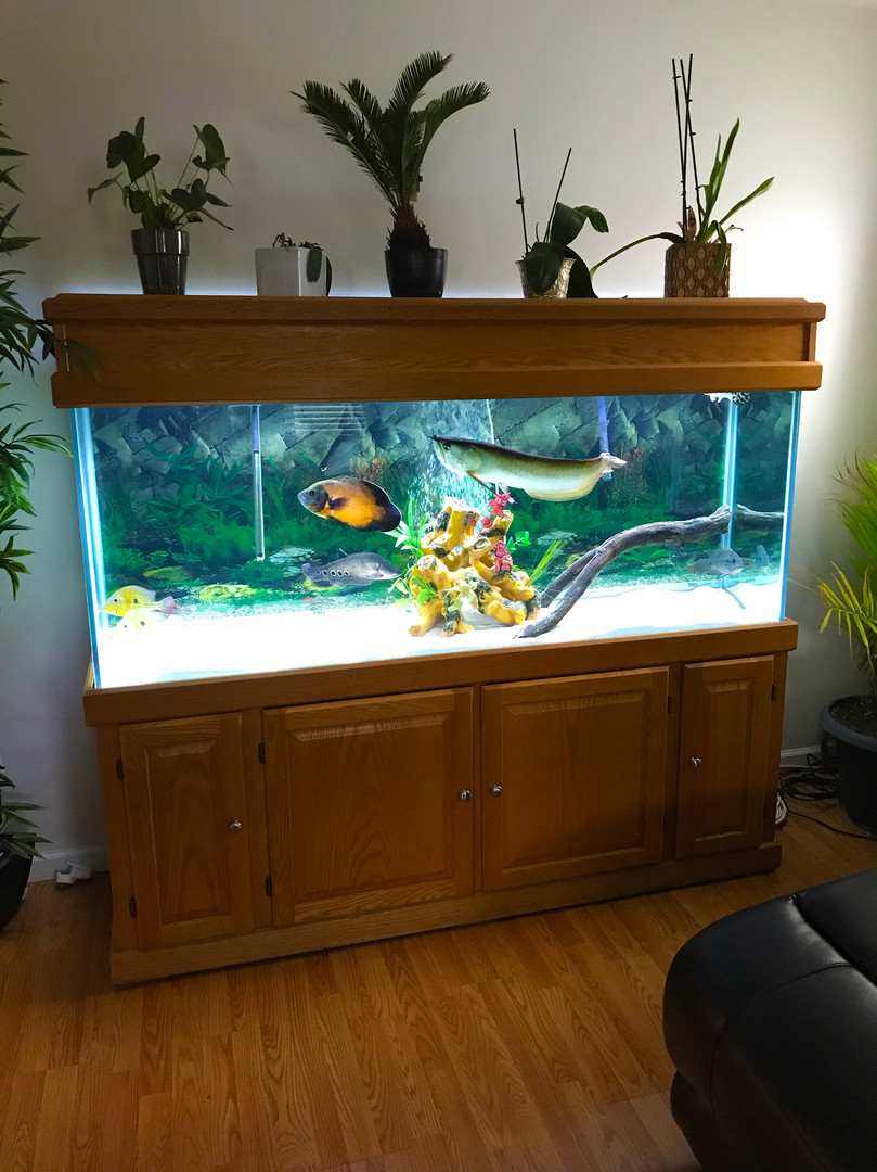 Custom aquarium cabinetry