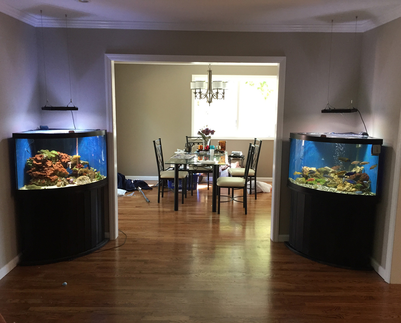 1 room, 2 fish tanks