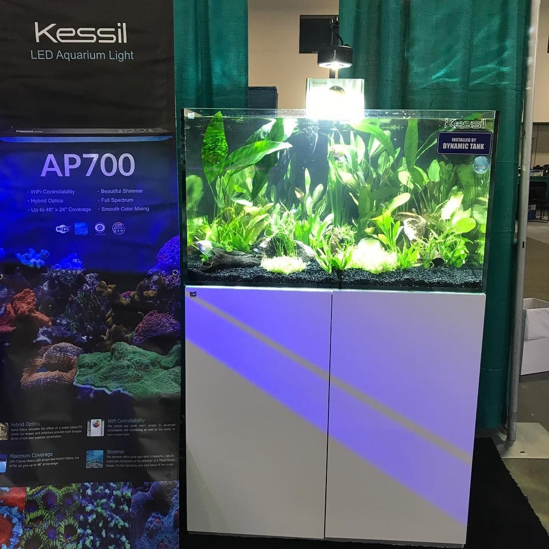 Tank setup for Kessil done by Dynamic Tank at Aquatic Experience  (Oct 2018)