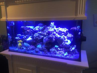 Custom aquarium cabinetry