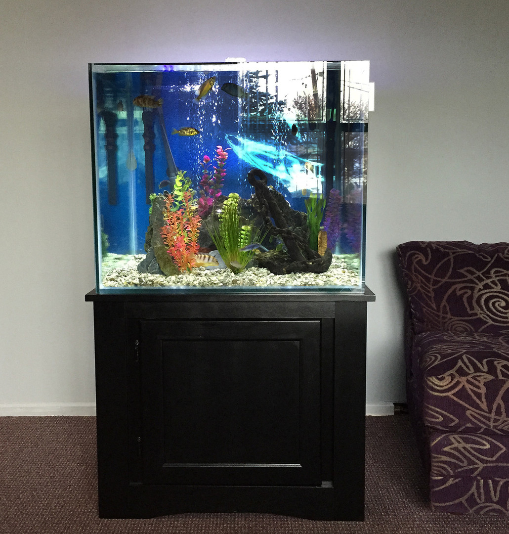 Accent any room with a fish tank