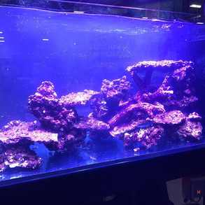 Tank setup for Real Reef Rock done by Dynamic Tank at Aquatic Experience  (Oct 2018)