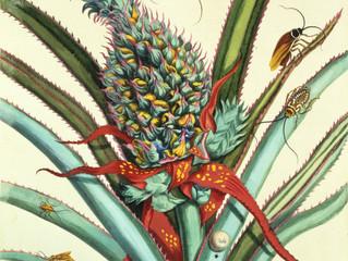 Botanical Surrealism