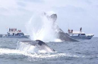 Puerto Lopez, Ecuador whale watching tou