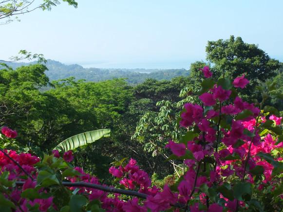 Bugonvillas, Costa Rica