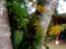 orchids on entrance tree.jpg