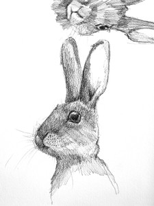 Weekend Rabbit Sketch