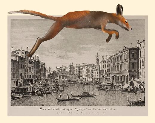Canaletto Fox