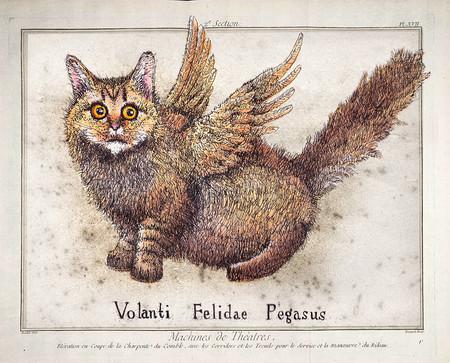 Pegasus (cat)